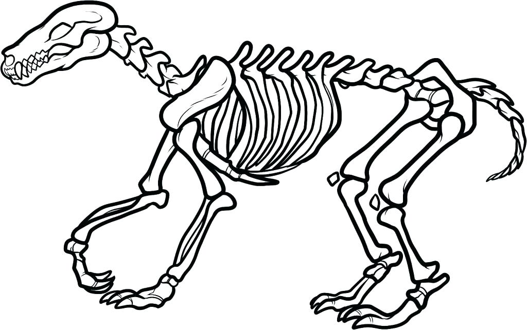 1024x642 Human Skeleton Coloring Pages Human Skeleton Coloring Pages Clip