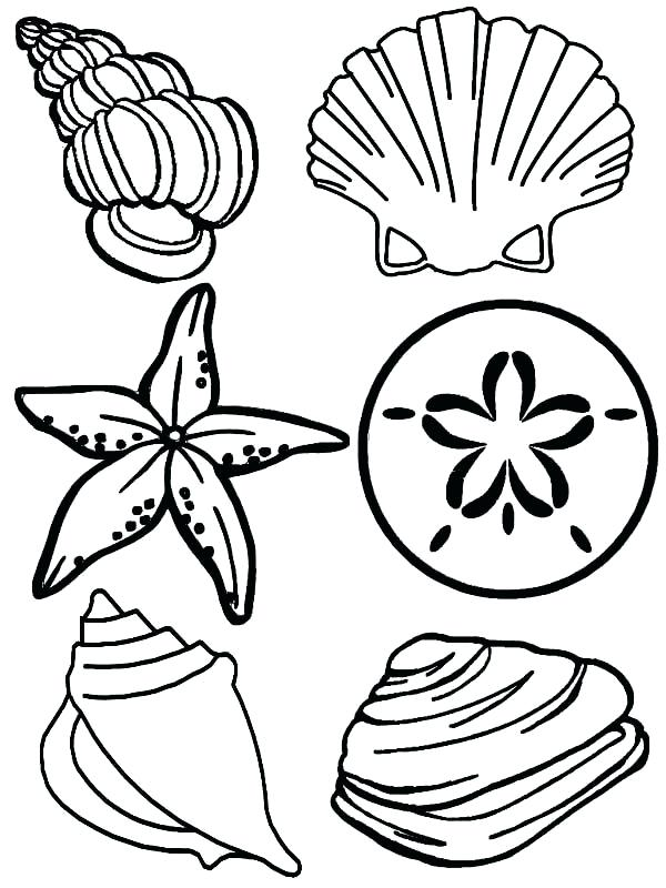 600x800 Sea Shell Coloring Page Sea Shell Coloring Page Fighting Conch