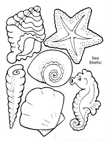 364x473 Sea Shell Coloring Page Sea Shell Coloring Page Seashells Coloring