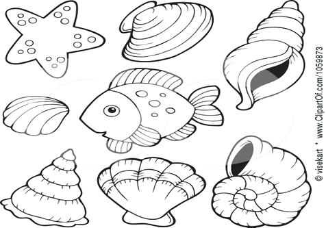 476x333 Shell Coloring Pages Coloring Page Shell Nature Printable Coloring