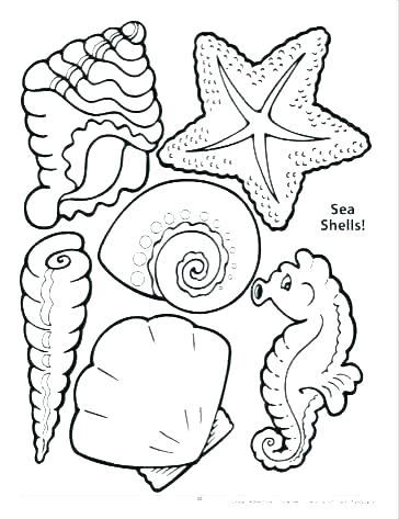 Conch Shell Coloring Page