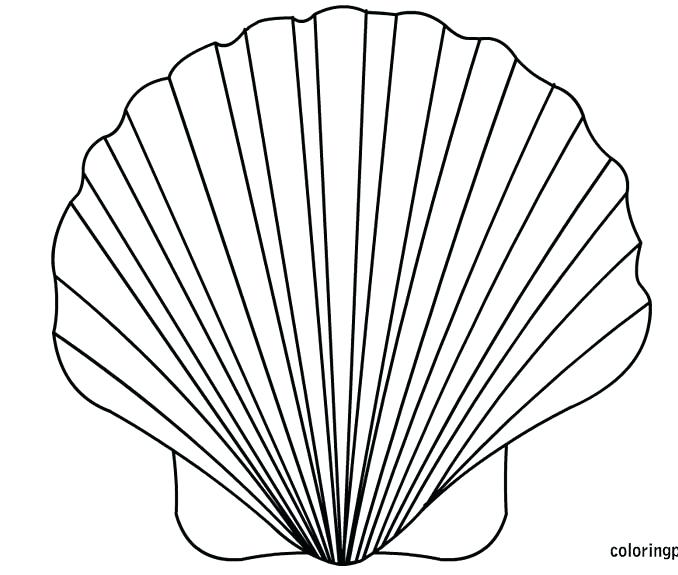 678x575 Sea Shell Coloring Page Sea Shell Coloring Page Fighting Conch