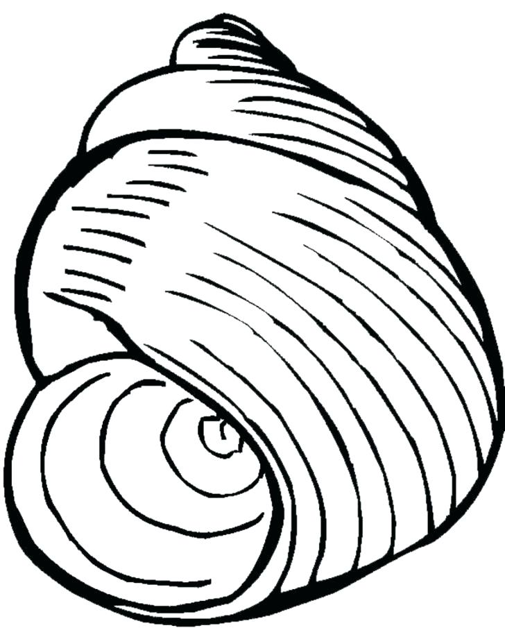 728x918 Sea Shell Coloring Page Seashell Coloring Page Sea Shell Pages