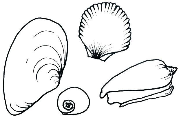 618x421 Seashell Coloring Page Sea Shell Coloring Page Sea Shell Coloring