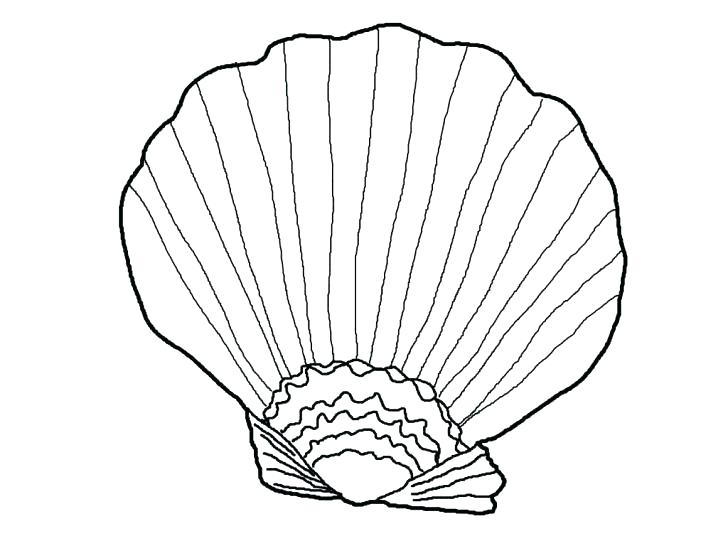 728x546 A Type Of Fighting Conch Seashell Coloring Page Wesmec Site