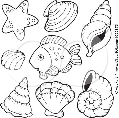 453x450 Conch Shell Coloring Page Coloring Pages Shell