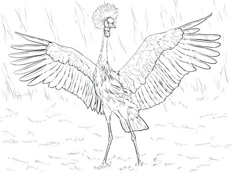 480x360 Crane Coloring Page Medium Size Of Coloring Pages Thanksgiving