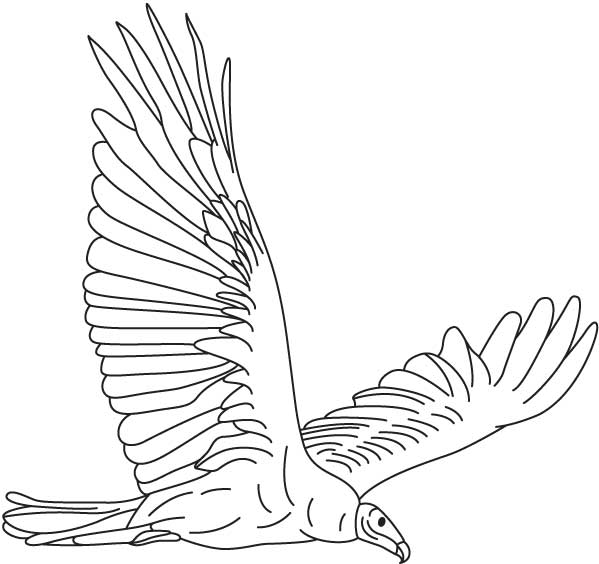 599x564 Vulture Coloring Page
