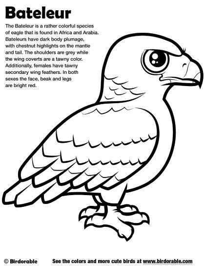 420x544 Birdorable Bateleur Coloring Page Birdorable Coloring Pages