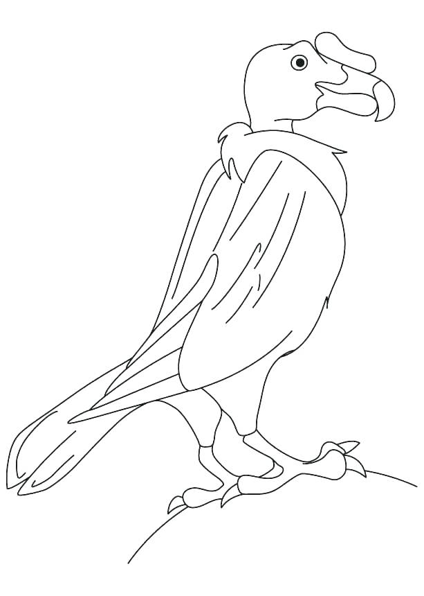 613x860 Vulture Coloring Pages Hooded Vulture Coloring Page Vulture