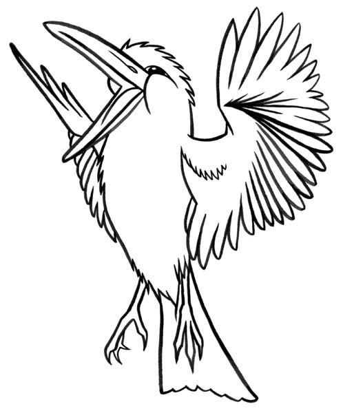 498x600 Kookaburra Bird Illustrations Art