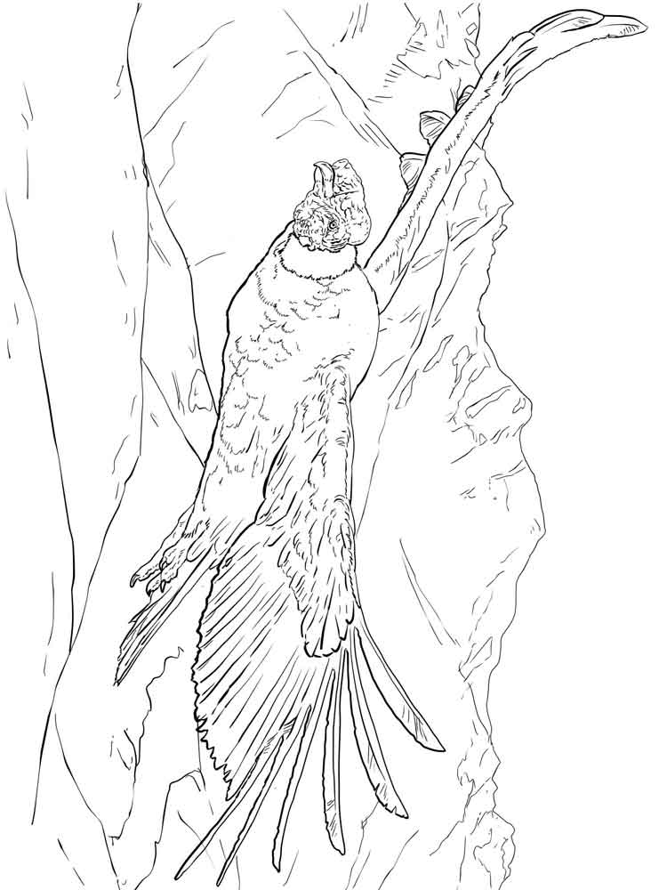 750x1000 Coloring Pages Condor