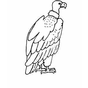 300x300 Condor Coloring Sheet