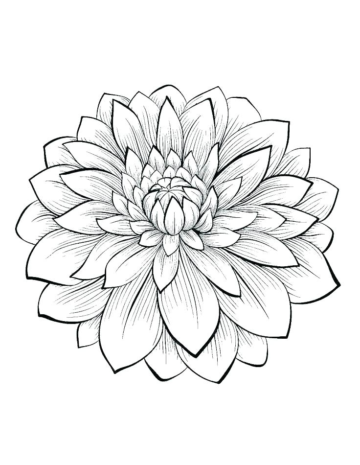 736x950 Simple Flower Coloring Pages Flower Color Pages Simple Flower