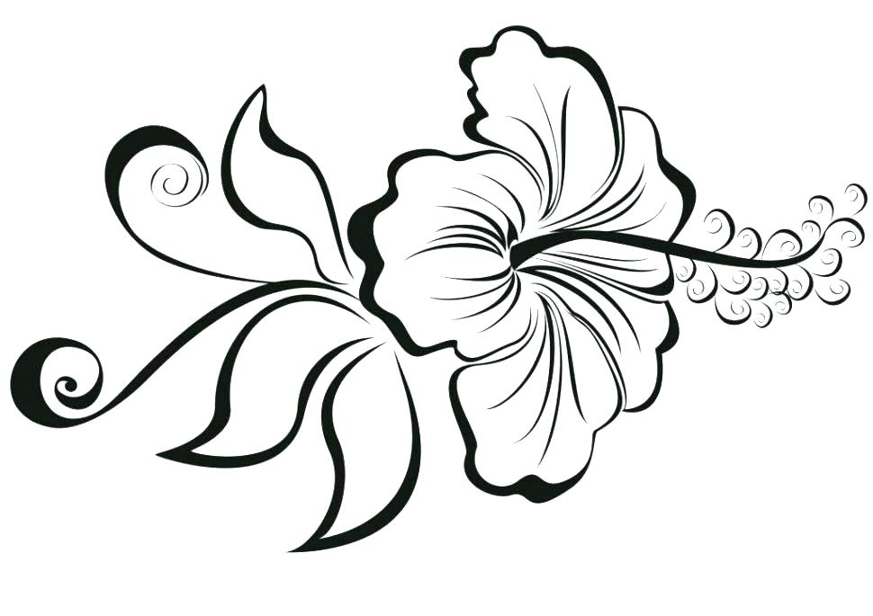 970x685 Lotus Flower Coloring Page Flower Coloring Pages Blooming Lotus