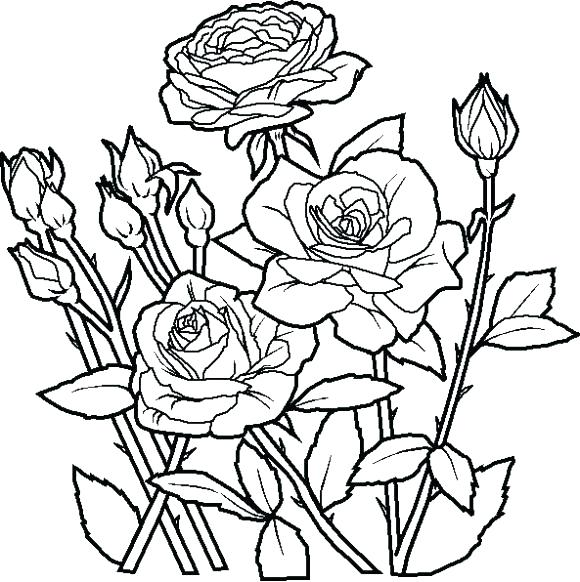 580x582 Simple Flower Coloring Pages Best Sunflower Simple Flower Pencil