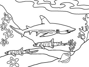 Cool Shark Coloring Pages