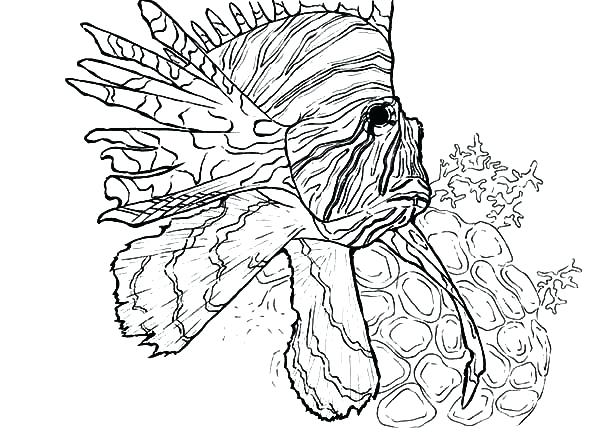 600x432 Coral Coloring Pages Coral Coloring Pages Swim Near Coral Reef