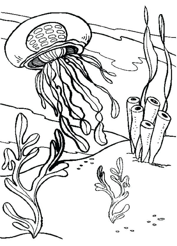 600x835 Coral Coloring Pages Free Printable Seaweed Coloring Pages Seaweed