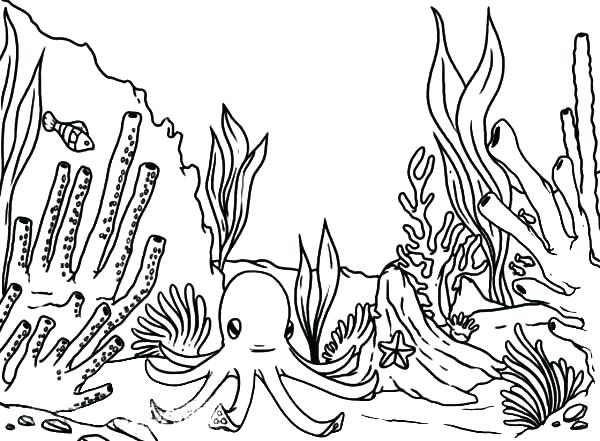 600x441 Coral Nature Printable Coloring Pages Coloring Page Coral Nature