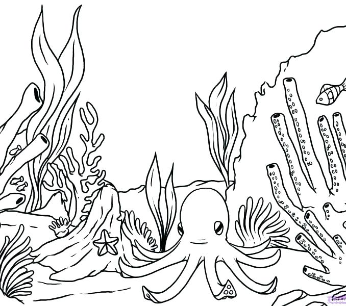 678x600 Seaweed Coloring Pages Seaweed Coloring Pages Coral Coloring Pages
