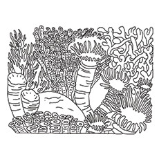 230x230 Top Coral Coloring Pages For Toddler Coral Reef Biome