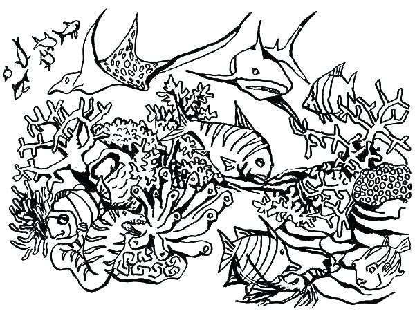 600x457 Coral Reef Coloring Page Coral Reef Coloring Pages Coral Reef