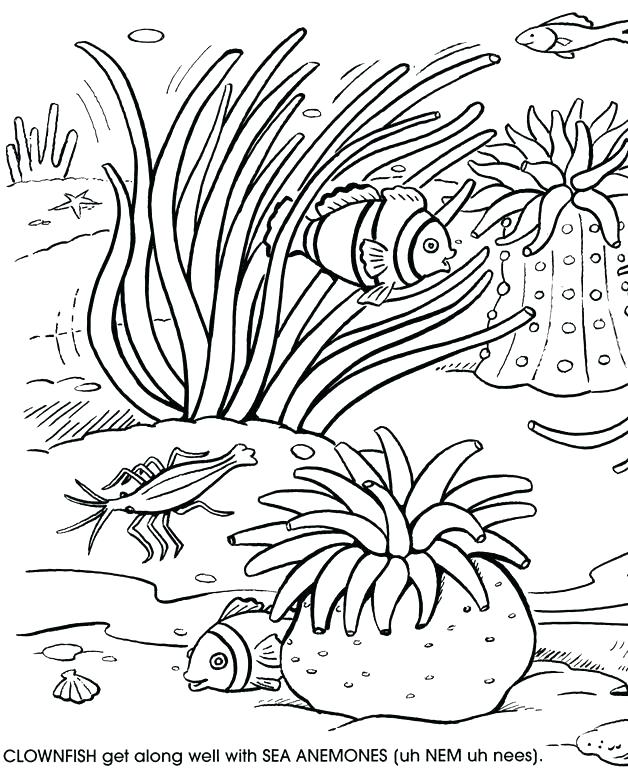 628x770 Coral Reef Coloring Pages Coral Coloring Pages Surprising Coral