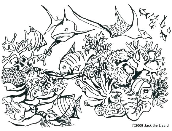580x442 Reef Coloring Pages Coral Reef Coloring Page Coral Reef Coloring