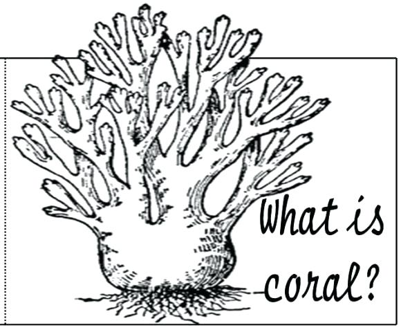 580x480 Coral Reef Coloring Pages Coral Reef Coloring Pages Coral Reef