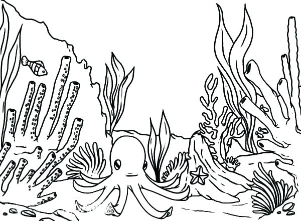 600x441 Coral Reef Coloring Pages Drawn Coral Reef Coloring Page Coral