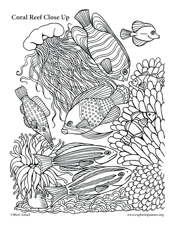612x792 Coral Reef Coloring Pictures Coral Coloring Pages Coral Reef