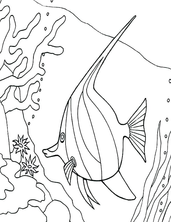 600x776 Coral Coloring Pages Coral Reef Coloring Page Coral Coloring Pages