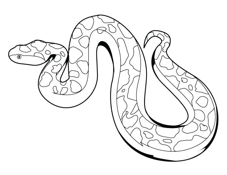 728x563 Snake Coloring Page Snake Coloring Pages Snake Colouring Pages