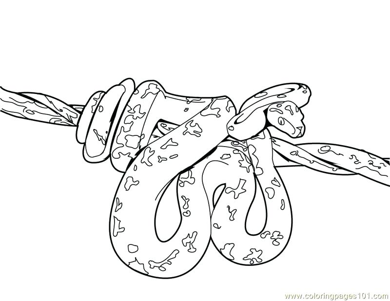 800x618 Coloring Pages Of Snakes Coloring Pages Snake Reptile Free