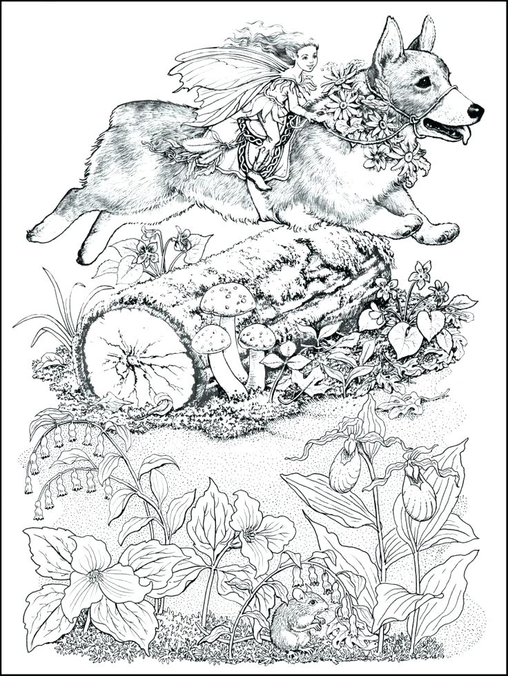736x980 Corgi Coloring Pages Corgi Coloring Pages Full Size Of Coloring