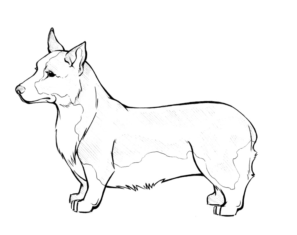 1024x810 Corgi Coloring Pages Download And Print For Free