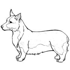 230x230 Top Free Printable Dog Coloring Pages Online Corgi, Free