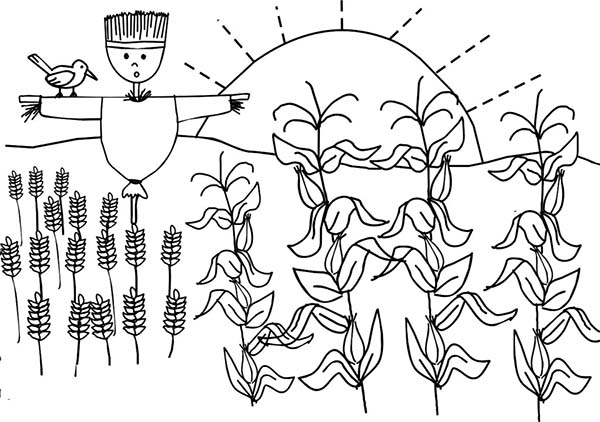 600x422 Corn Plant And Scarecrow Coloring Page