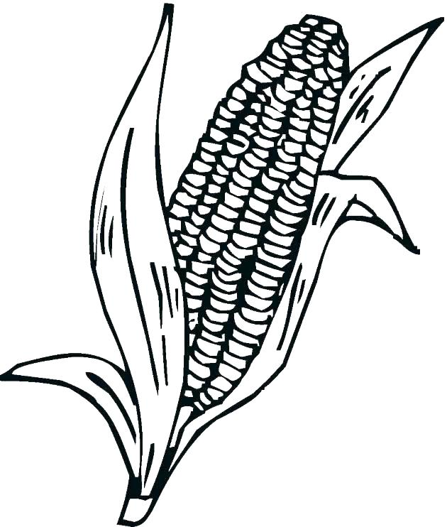 630x742 Corn Stalk Coloring Page Corn Stalk Coloring Page Corn Coloring