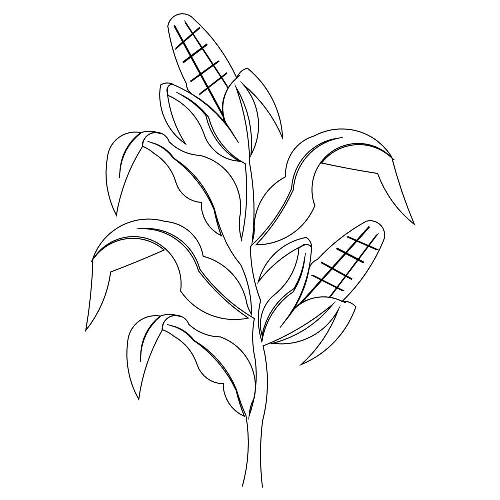 1000x1000 Corn Stalk Coloring Page Free Printable Pages Mesmerizing