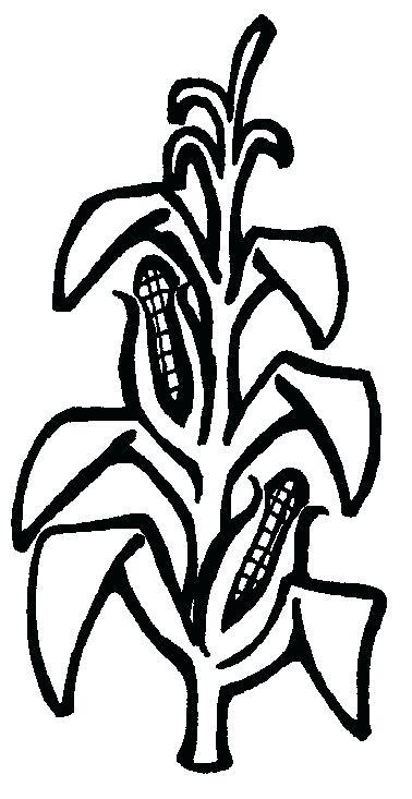 378x733 Corn Stalk Coloring Page Thanksgiving Free Printable Corn Stalks