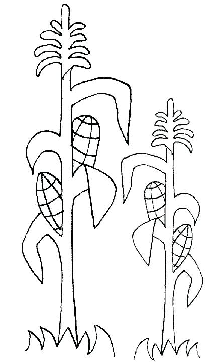 432x720 Peyton Manning Coloring Pages Corn Stalk Coloring Page
