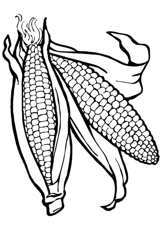 531x750 Corn Coloring Page Free Printable Corn Stalks Coloring Pages