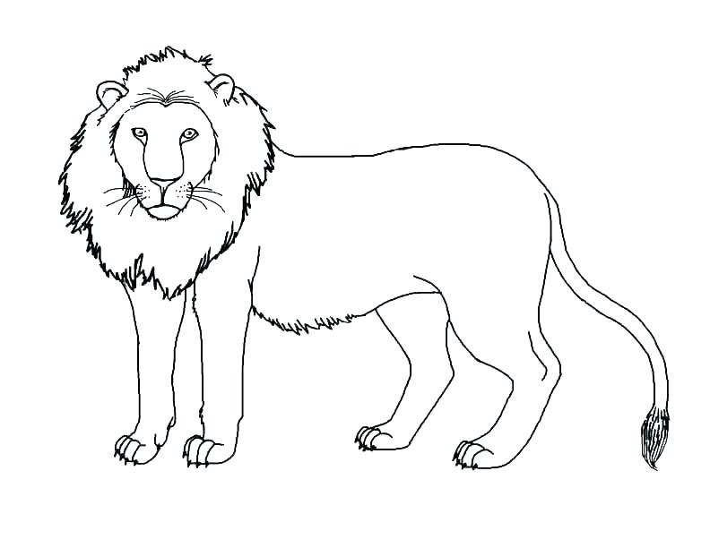 792x612 Mountain Lion Coloring Page Mammals Attacking Mountain Lion Cougar