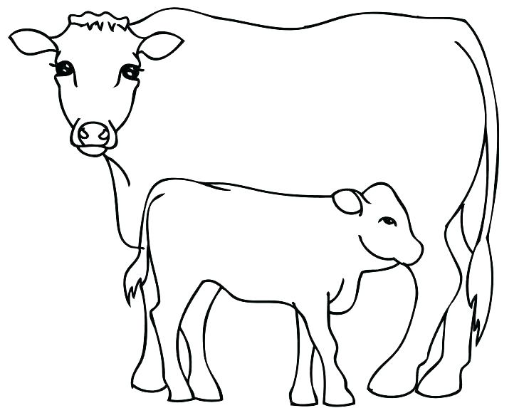 736x573 Coloring Pages Cow Bull Coloring Page Coloring Pictures Of Cows