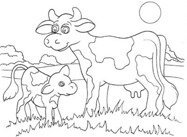 600x441 Cow And Calf Coloring Pages