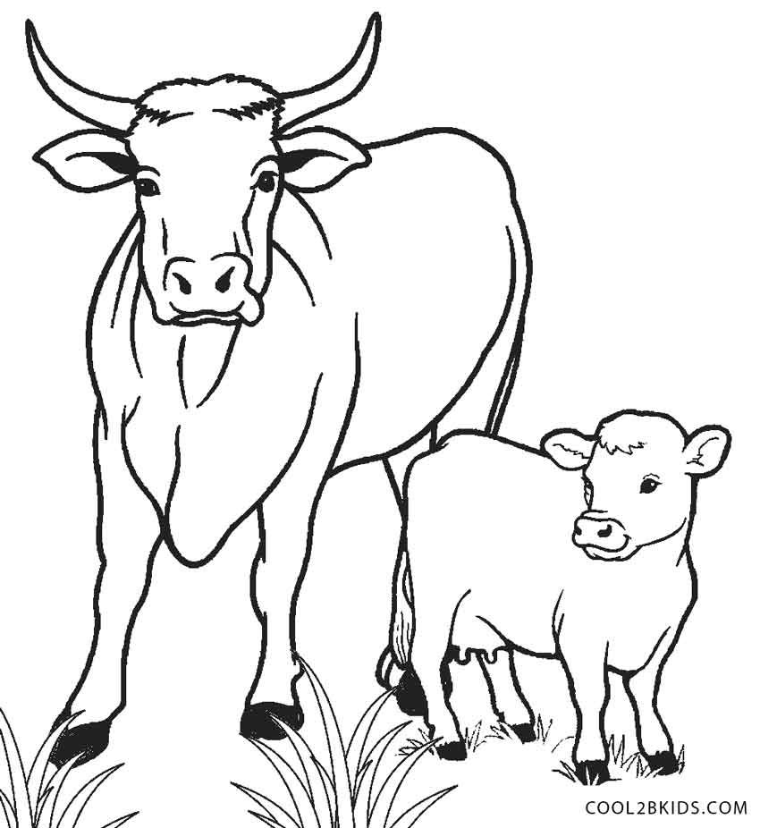850x926 Cow And Calf Coloring Pages