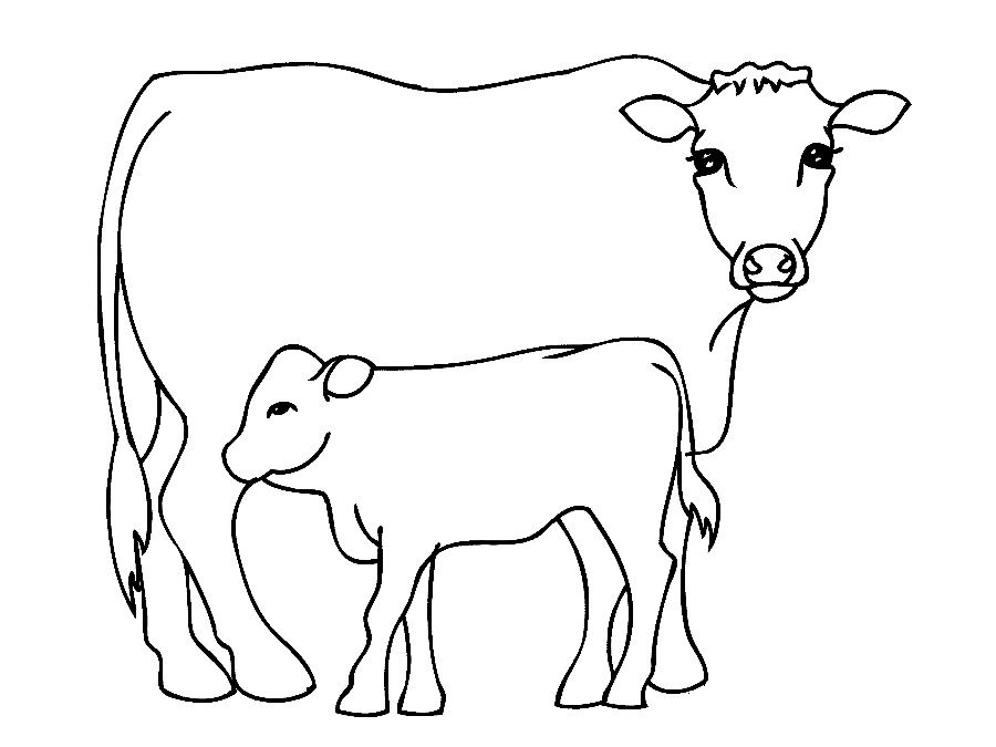 900x675 Cow Coloring Page Sketch Template Coloring Book Cedrqu