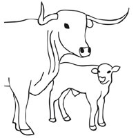 200x200 Cow And Calf Coloring Pages Surfnetkids